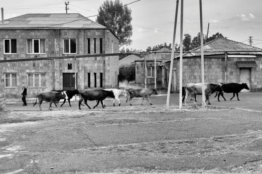 Agarak, Province d'Aragatsotn, Centre de l'Arménie - Ce village, situé à une heure d'Erevan, la capitale arménienne, vit principalement d'agriculture (élevage, maraichers et nuciculture).